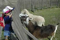 クウ(手前)とシロに草をやる三木小学校の子どもたち