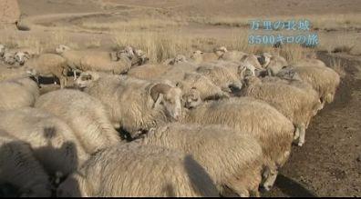 水飲み場?で水を飲む羊たち