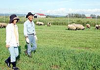 羊農家への挑戦を始めた夫妻