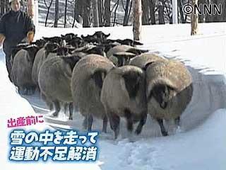 雪の中を走って運動不足解消