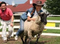 羊のロデオ