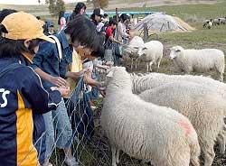 餌をやるなど羊と触れ合う児童たち