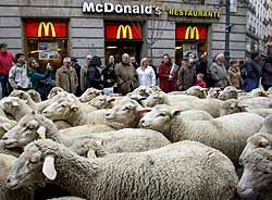 マドリッドの市街地を練り歩く数百頭の羊