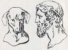 犬とプラトン