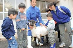 伸びた毛を刈り終えた羊と触れ合う子どもたち