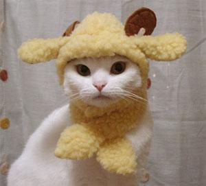 ポワポワ羊さんに変身セット (ネコ用)