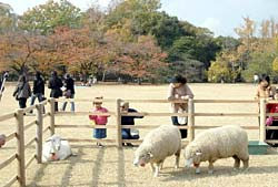 ヤギやヒツジがくつろぎ、普段と違う雰囲気の大芝生地を楽しむ入園者