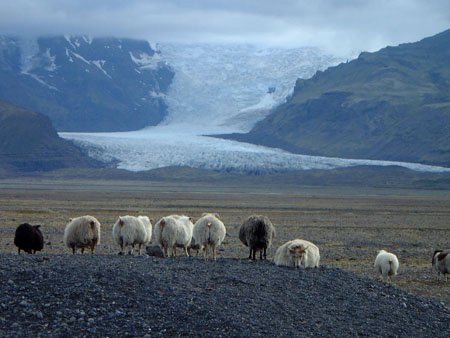 Sheep_glacier_2s.jpg