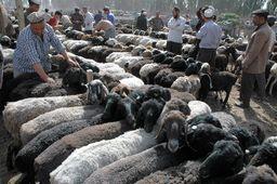 動物市場で売られる羊たち