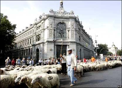 マドリードの羊たち