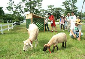 柵を作る荒蒔さんらのそばで草を食べるヒツジ(常盤公園で)