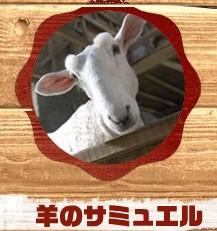 羊のサミュエル