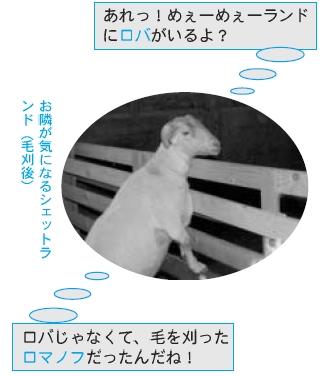 chipbetu0605.jpg