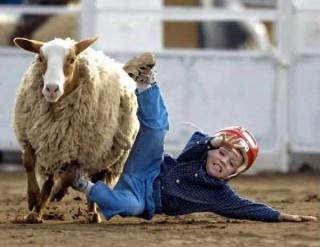 羊のロデオ大会