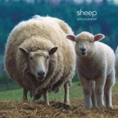 Sheep 2008 Calendar おもて