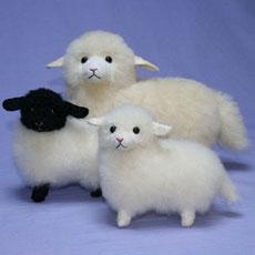 迷える小羊さん