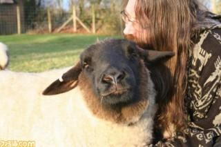 羊動物と紅茶とカレー