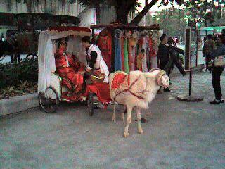 観光用の羊車