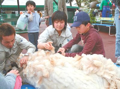 慎重な手付きで毛を刈っていく子どもたち