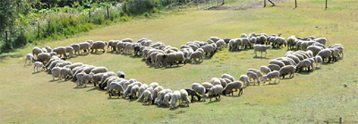 愛の羊文字