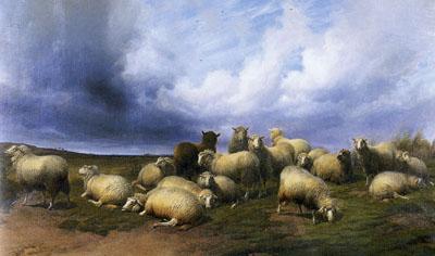 「放牧の羊」