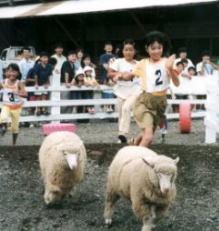 羊のかけっこショー