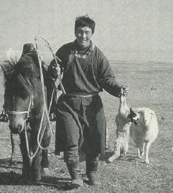 西ウジムチンの放牧