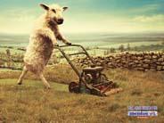 芝を刈るひつじ