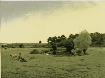 モンシャブロン 「牧場」