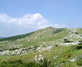 ピナクルが羊の群れのように見える羊群原
