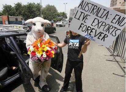 エジプトで動物愛護団体が羊の生体輸出を停止したオーストラリアに感謝の花束