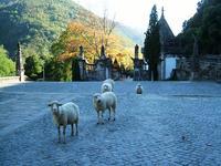 羊と一緒にセニョーラ・ダ・ペネーダ教会にお参り