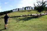羊飼いの合図で牧羊犬が高台で草を食むヒツジたちのところへ猛進します。