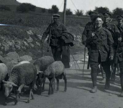 戦場の羊たち