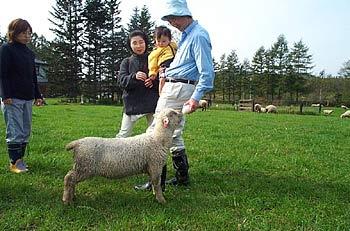 YORKSHIRE FARMのヒツジ