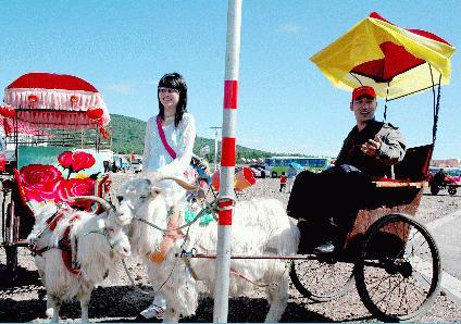 羊は人力車を引いて、ぼろ儲けをする