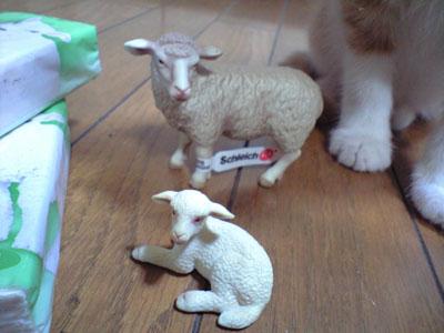 猫に狙われる親子羊