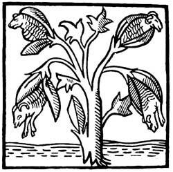 植物羊マンデヴィル、オドリコバージョン