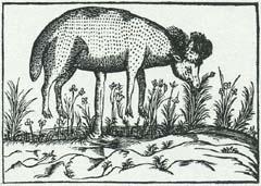 植物羊臍でつながるバージョン