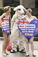 動物愛護キャンペーン