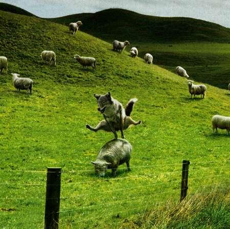 オオカミ→跳び羊(跳び箱)