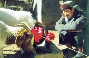 ようこそ、羊さま。
